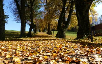 Battle of the Seasons – Autumn
