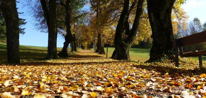 Battle of the Seasons – Autumn