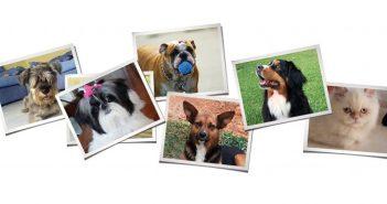 Pets: The Expanding Pet Friendly Universe