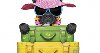 Viajando com seu pet