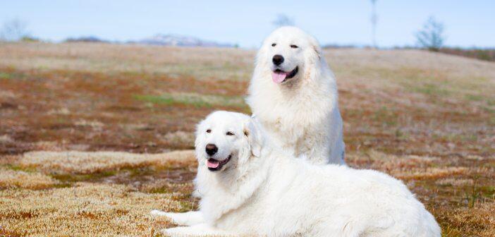 Cães: As raças italianas mais famosas