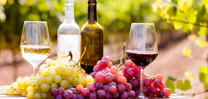 Toast the best wines in South America